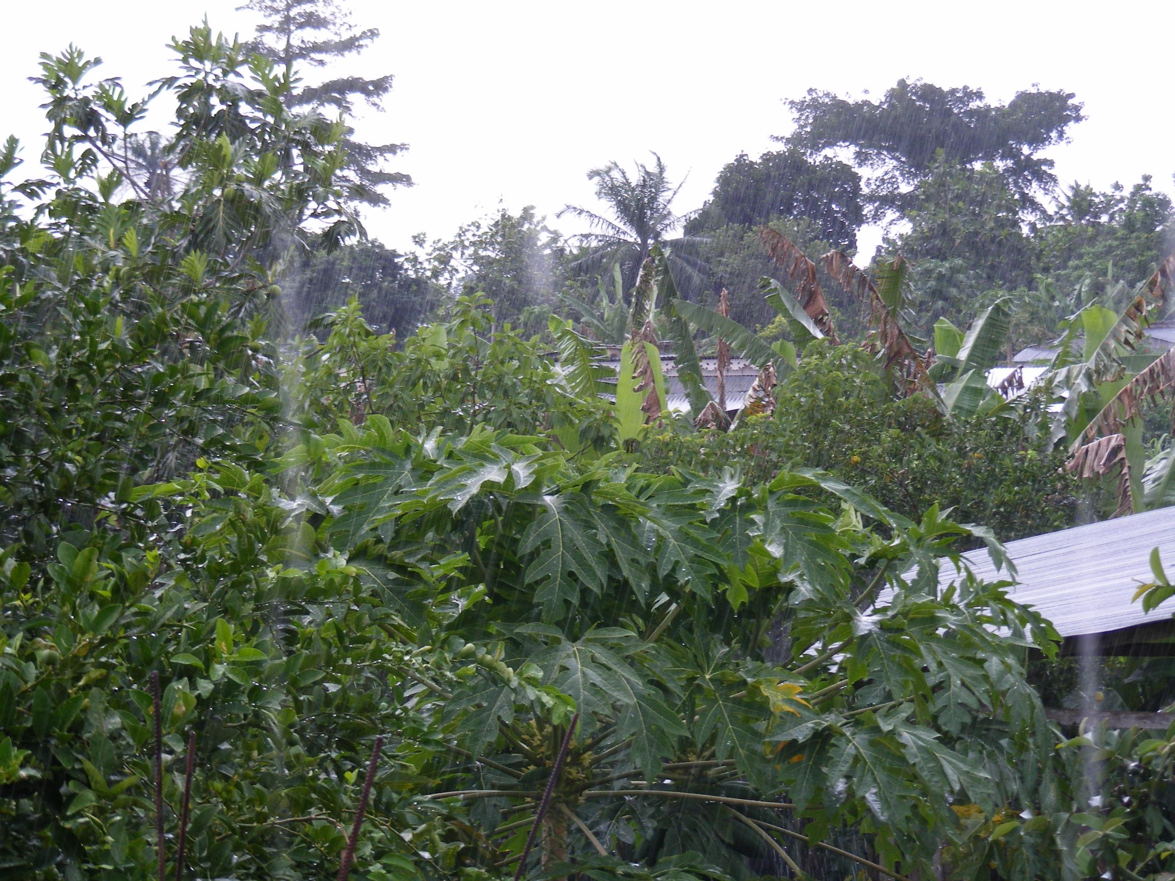 Boa tarde todos! Vendredi  23 Mai dans La vie à Sao Tomé! dscf0338